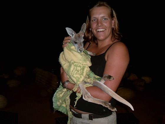 Een jonge opgevangen kangaroe